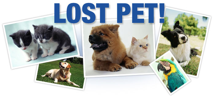 lost-pet